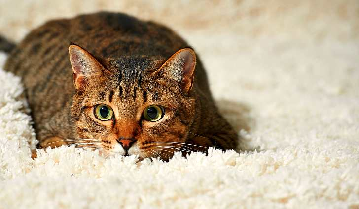 Зачем нужна сода домашним животным? Как поить и давать