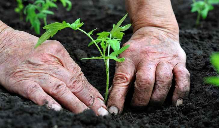 Посадка растений в открытый грунт
