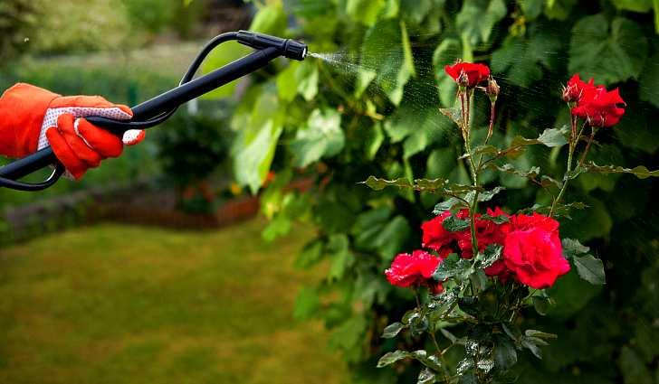 Обработка цветов в саду