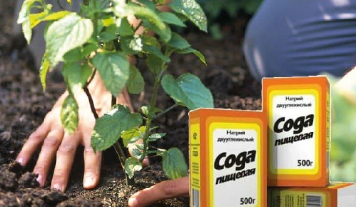 Натрий двууглекислый в саду